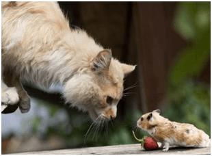 gato y raton
