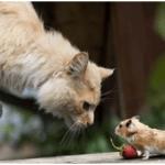 ¿Los gatos son la solución a los ratones?