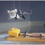 ¿Que tan cierto es que a los ratones les gusta el queso?