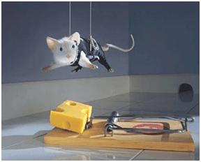 Coger ratas ratones con queso