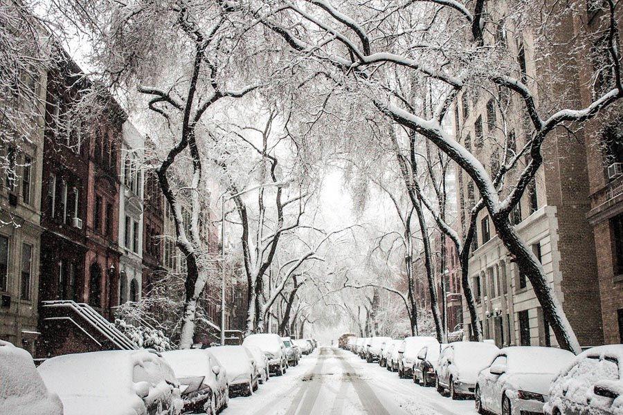 plagas casas invierno
