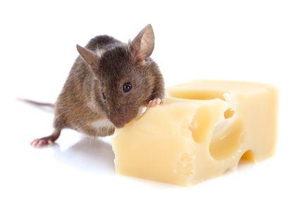 raton y queso