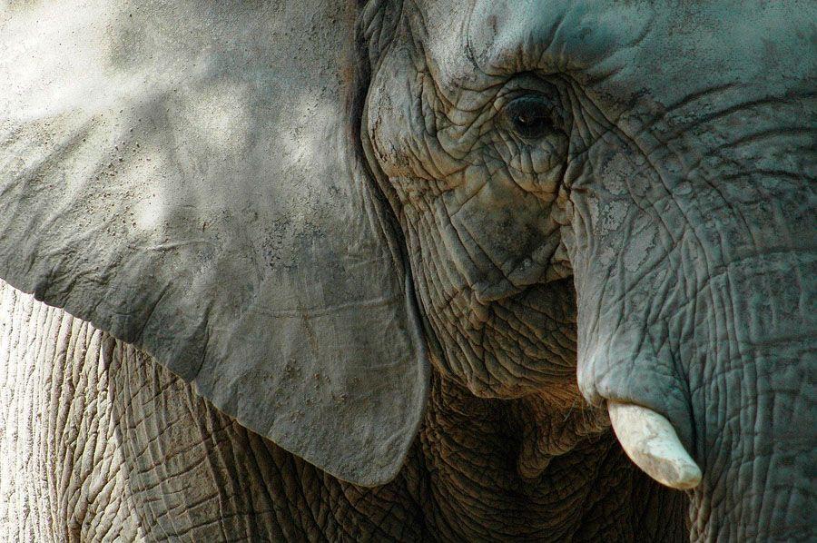elefantes temen a ratones