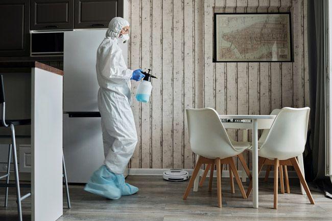 nebulizacion biocidas hormigas