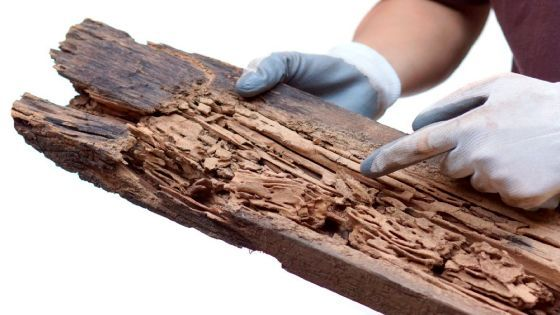 eliminar termitas sevilla
