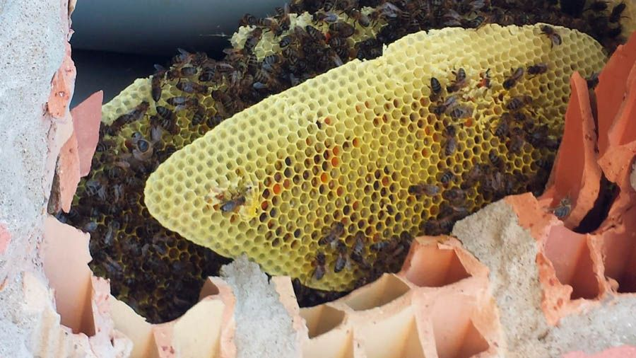 colmena abeja en hogares